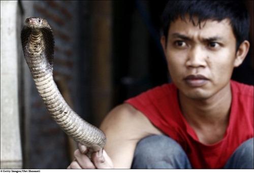 Fast food da Indonésia - O cobraburger 3