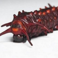 Insectos de Marte 7