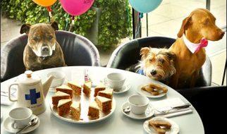 Restaurante australiano tem ementa para cães 1