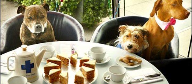 Restaurante australiano tem ementa para cães