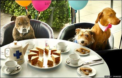Restaurante australiano tem ementa para cães 2