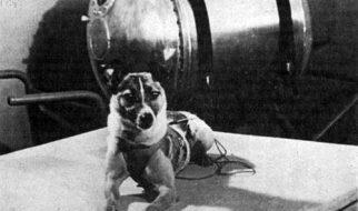 Cadelas no espaço 1