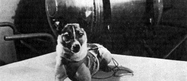 Cadelas no espaço