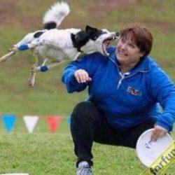 Apanhados caninos 16