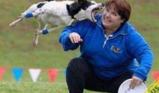 Apanhados caninos 17