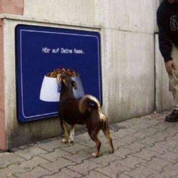 Apanhados caninos 24