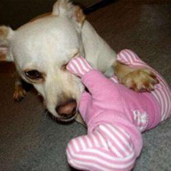 Apanhados caninos 11