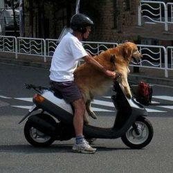 Apanhados caninos 21