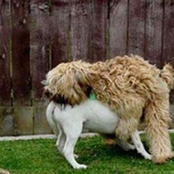 Apanhados caninos 4