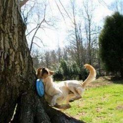 Apanhados caninos 15