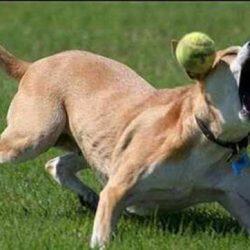 Apanhados caninos 25