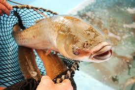 Circo obrigado a cancelar espectáculo onde mulher regurgitava um peixe vivo 1