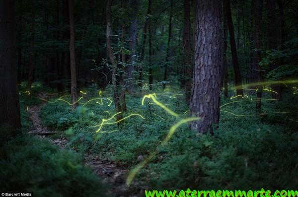 As luzes de um bosque mágico 1