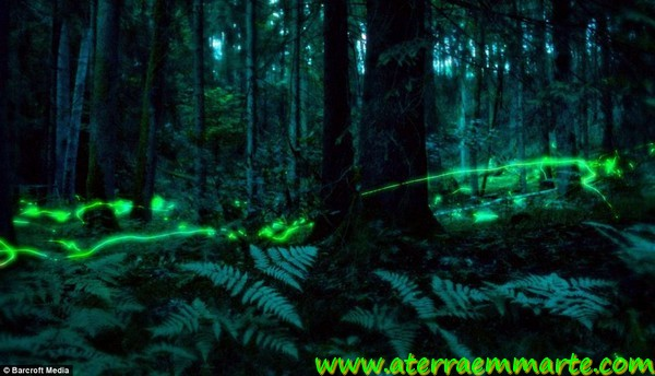 As luzes de um bosque mágico 3