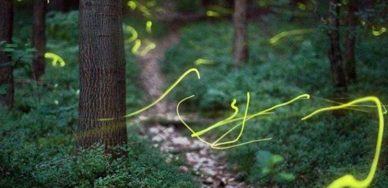 As luzes de um bosque mágico