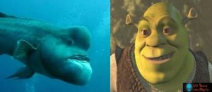 shrek-peixe-parecidos 3
