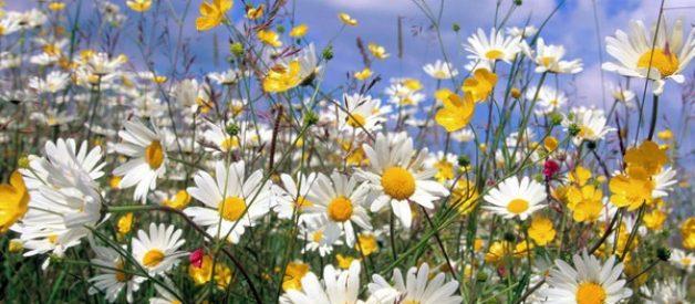Sabia que as flores cada vez cheiram menos?