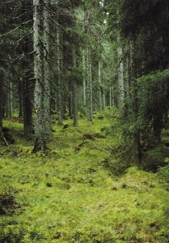 As lendárias árvores gigantes do nosso planeta 7