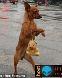 A cadela Lulu – a diva canina