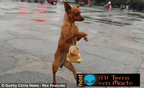 A cadela Lulu - a diva canina 3