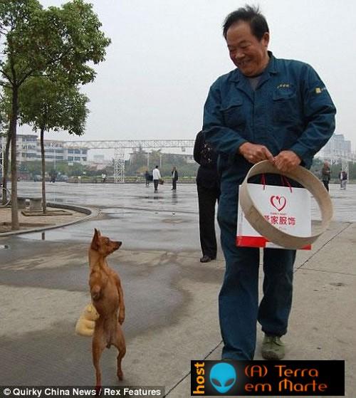 A cadela Lulu - a diva canina 1