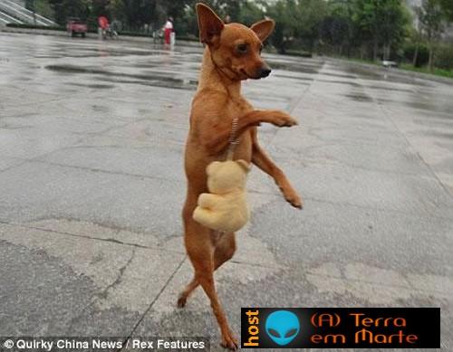 A cadela Lulu - a diva canina 2