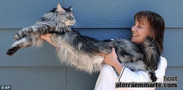 """""""Stewie"""", o gato mais comprido do mundo 1"""