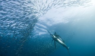 As melhores fotos subaquáticas de 2010 2