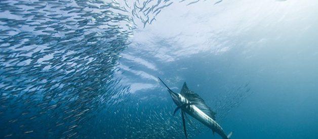 As melhores fotos subaquáticas de 2010