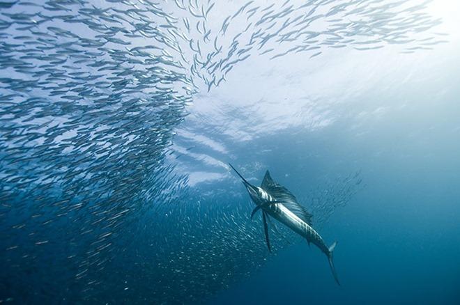 As melhores fotos subaquáticas de 2010 5