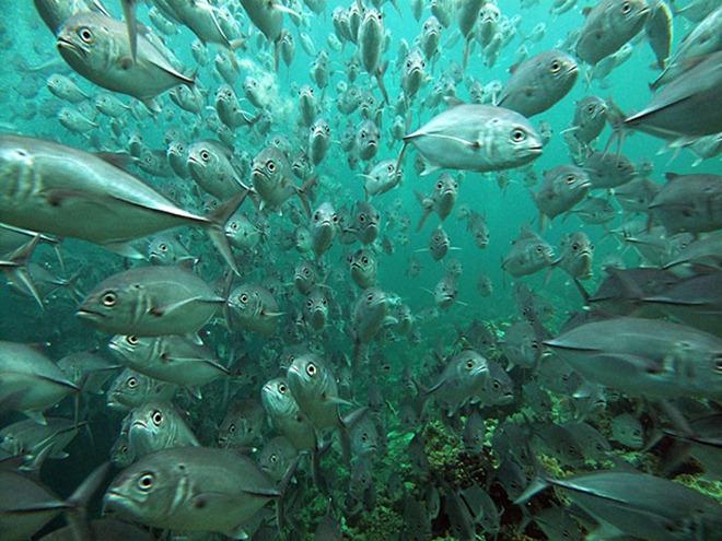 As melhores fotos subaquáticas de 2010 7