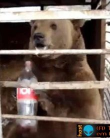 O urso que era obrigado a beber Coca Cola