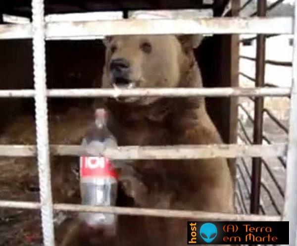 O urso que era obrigado a beber Coca Cola 1