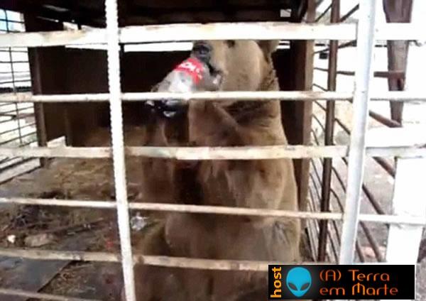 O urso que era obrigado a beber Coca Cola 3