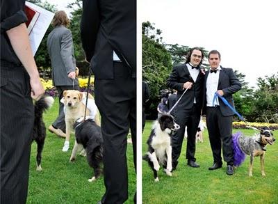 Australiano casou-se com a «melhor amiga»... a cadela 2