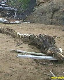 Criatura desconhecida encontrada por soldados russos
