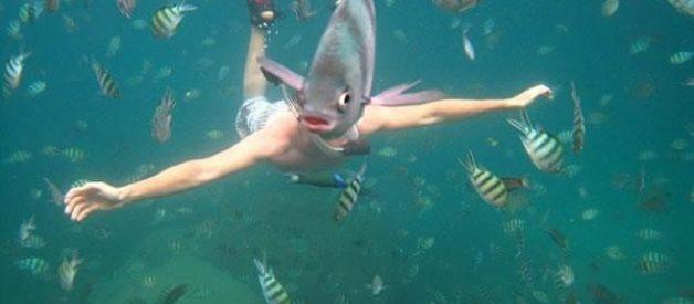 Que peixe é este?