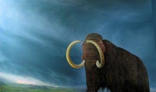 Em 5 anos será possível haver novamente mamutes na Terra 2