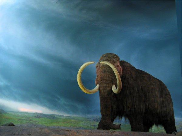 Em 5 anos será possível haver novamente mamutes na Terra 1