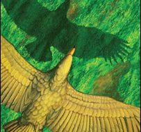 O voo da maior ave conhecida 1