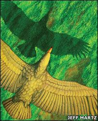 O voo da maior ave conhecida