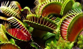 O que comem as plantas carnívoras? 4