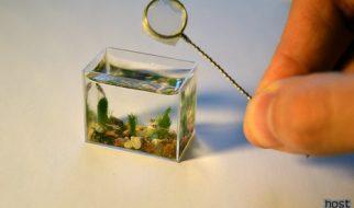 O aquário mais pequeno do mundo 4