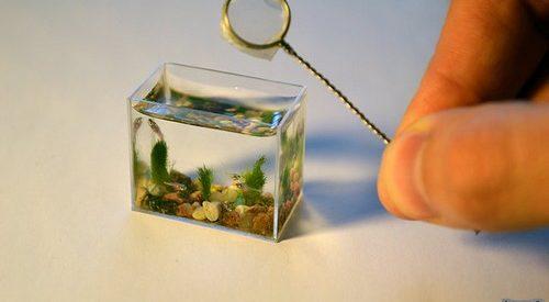 O aquário mais pequeno do mundo