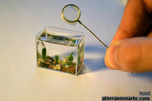 O aquário mais pequeno do mundo 2