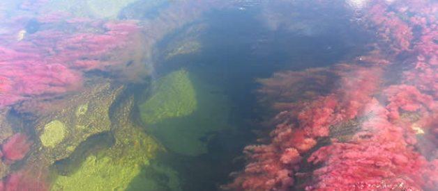 Caño Cristales: O rio mais colorido do mundo