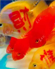 Peixes tatuados: a última moda