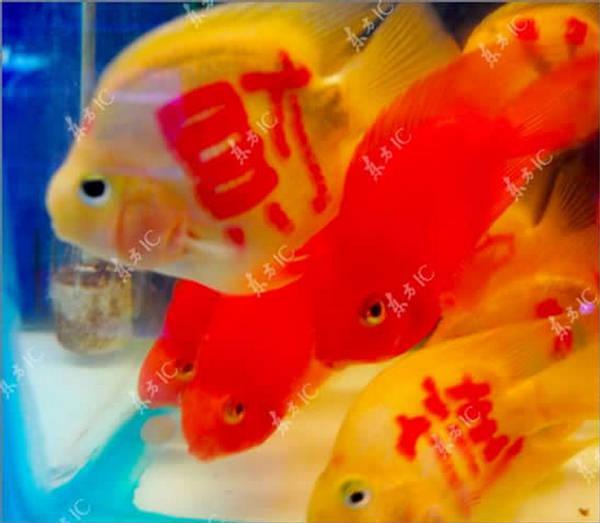 Peixes tatuados: a última moda 2