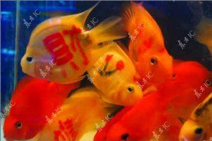 peixes tatuados da sorte 3 3