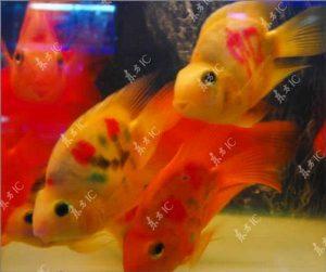 peixes tatuados da sorte 5 3